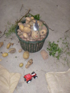 Frau Vogel informierte über die Kartoffel.