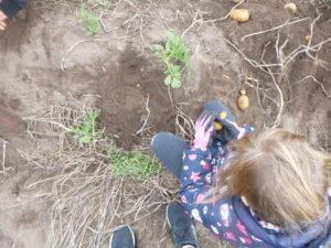 Dort wurde nach Kartoffeln gegraben.